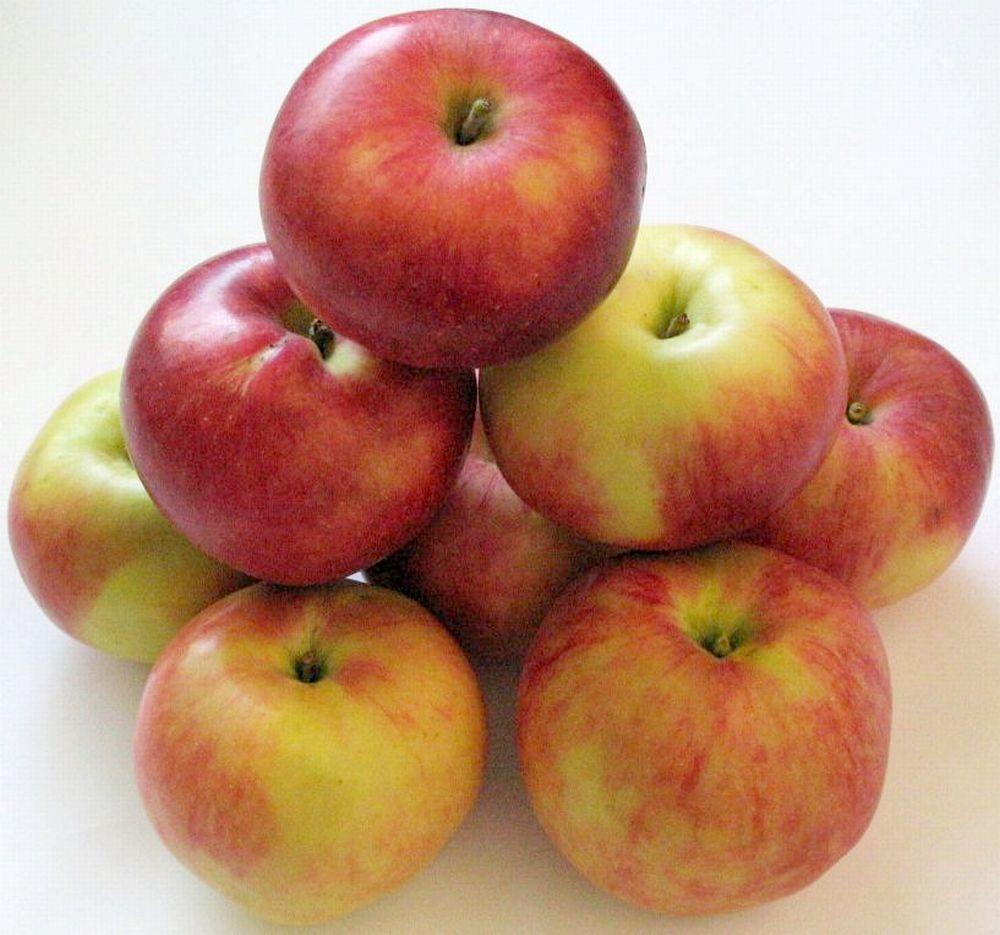 Apple cv Estival dr Sestras 1