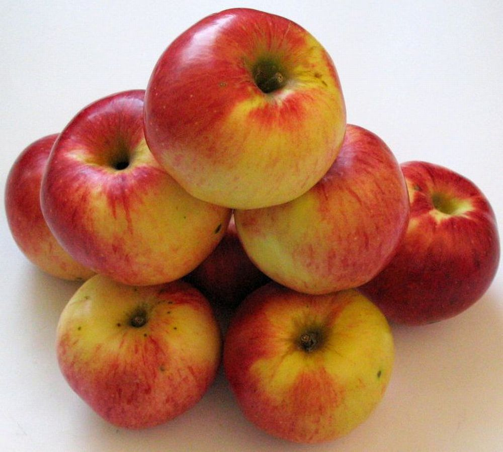 Apple cv Precoce de Ardeal dr Sestras 1