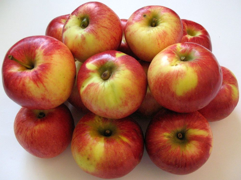 Apple cv Precoce de Ardeal dr Sestras 3
