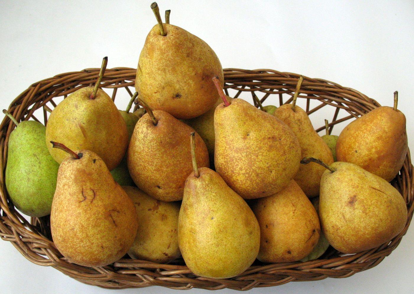 Arvena new pear cultivar FRS Cluj
