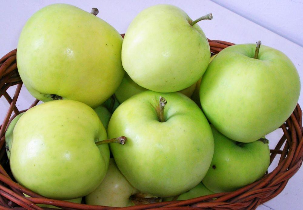 Auriu de Cluj cv apple Sestras 4