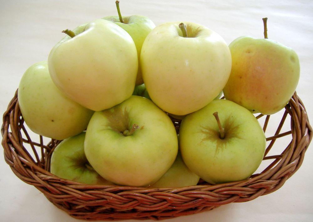 Auriu de Cluj cv apple Sestras 5