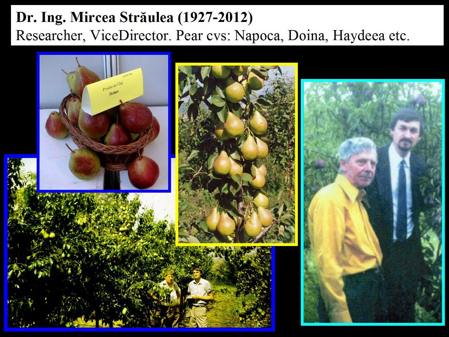 Dr Mircea Straulea and Prof. dr. Radu E. Sestras. Pear cultivars